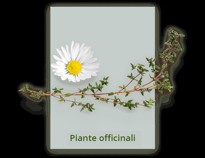 vendita di piante officinali